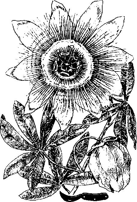 Плод Бумажный фото